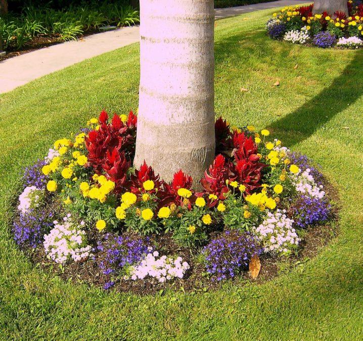 10+ Maravillosos Canteros de Flores Alrededor de Árboles