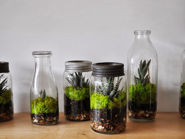 15+ Ideas Fabulosas Para Tener Tu Terrario