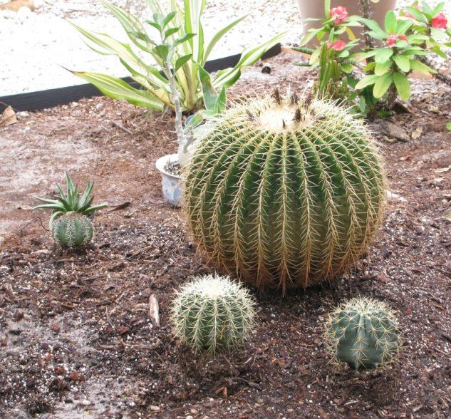 20+ Maravillosos Jardines de Cactus