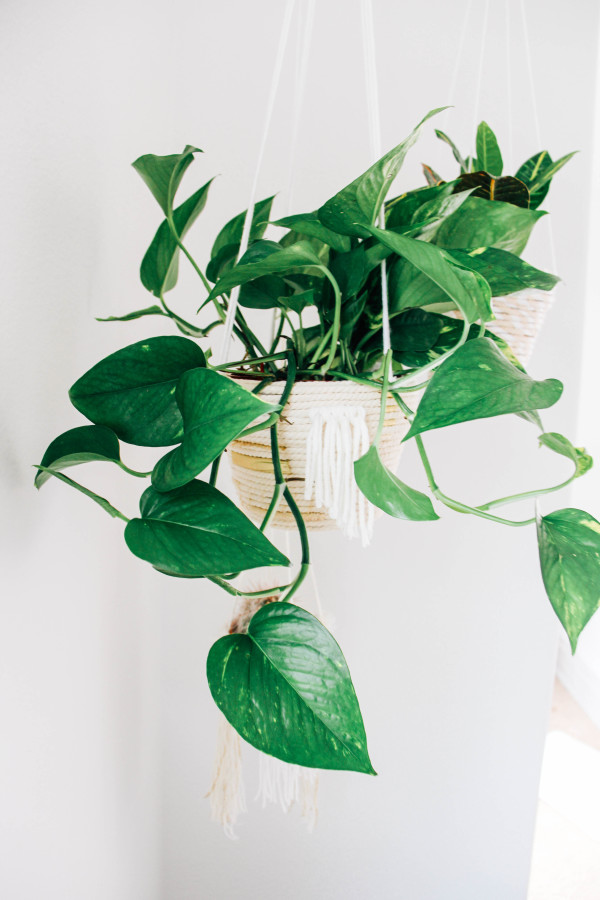 15+ Estupendas Macetas Colgantes con Cuerda