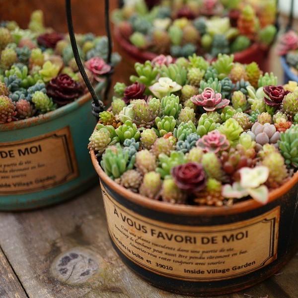 15+ Impresionantes Mini Jardínes con Suculentas