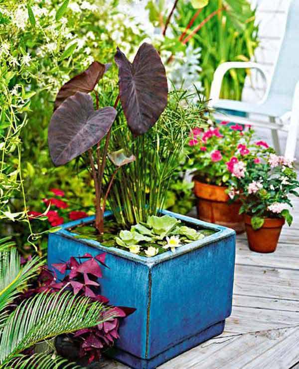 15+ Impressionantes Ideas Mini Jardines Acuáticos