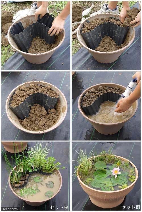 20+ Maneras Creativas para Mostrar Sus Plantas
