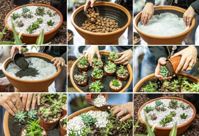 ideas creativas con plantas para decorar tu hogar